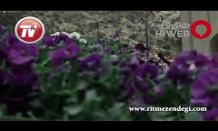 دروغ سیزده بدر شیرازی ها: ماهی قرمزهای ما 120 سال عمر می کنند!/گشت و گذار با سرمربی مشهور فوتبال ایران در بازارهای عیدانه شیراز