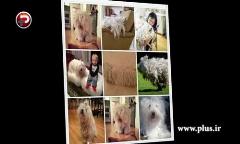 سگی عجیب با بیش از 2 میلیون فالوئر در شبکه های اجتماعی