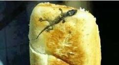 پخت نان با چاشنی مارمولک؛ ماجرای عجیب پیدا شدن مارمولک پخته در نان یک شهروند زاهدانی!