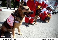 آموزش سگ های زنده یاب در تبریز