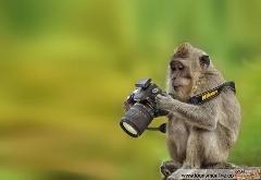 حیواناتی که دوست دارند عکاس باشند