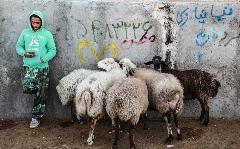 تصاویری از بازار خرید و فروش دام در آستانه عید قربان