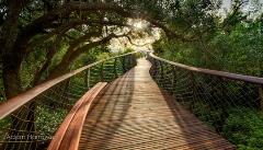 تصاویر پل هیجان انگیزی که تماشاگران می توانند از آنجا مثل یک میمون یا پرنده،جنگل را ببینند!