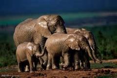 اینو ببین ماساژ آدم توسط فیل ها