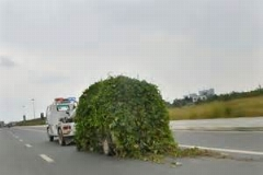درخت را با وانت ریشه کن کرد/این چه کاریه