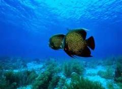 طبیعت بسیار زیبا و فوق العاده زیر آب/اقیانوس
