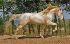 زیبا ترین اسب جهان/چقدر قشنگه