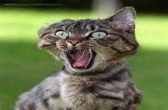 ترسیدن یهویی و جالب گربه ها/چطوری میترسه...