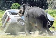 کلیپی از حمله فیل به عکاسان حیات وحش/دیدنی
