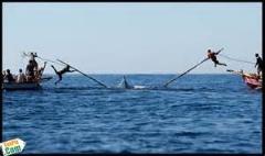 روش عجیب صید کردن نهنگ/عجیب و باور نکردنی
