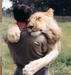 از حیوانات بیاموزیم/خیلی جالبه /محبت یک شیربعد از 2سال دوری