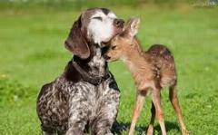 کتک خوردن سگ از آهو...صحنه ای نادر از حیات وحش