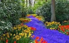گیاهان رستاخیزی..زندگی دوباره پس از مرگ
