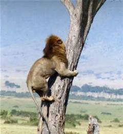 خنده دار ترین صحنه ای که از شیر باشه اینه...فرار کرد