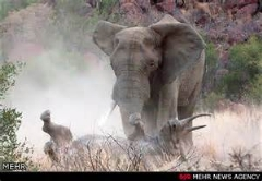 نبرد دیدنی فیل و کرگدن