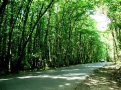 جنگل گیسوم و اسب های زیبا و شگفت انگیز ایران/دیدنی