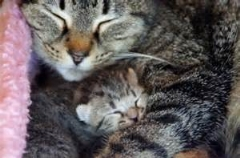قدرت باور نکردنی گربه مادر برای کمک کردن به فرزندانش