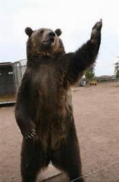 کلیپ دیدنی از جنگ خرس و کروکدیل