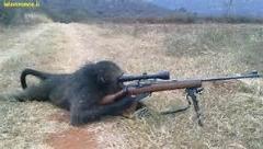این مرد در یک اقدام ناشیانه اسلحه را به دست میمون می دهد و میمون اینگونه جوابش را می دهد/حتما ببینید