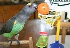 بسکتبال بازی کردن طوطی/جالب و بامزه