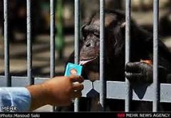 بچه ها در باغ وحش و عکس العمل جالب حیوانات در قفس پس از دیدن بچه ها