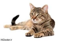 سرعت عمل دیدنی گربه در شکار ماهی