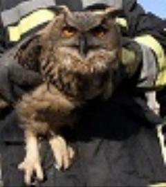 نجات حیوانات از مرگ/کلیپ فوق العاده از کمک انسان ها به حیوانات