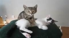 ویدئوی جالب از ماساژ دادن توسط گربه/خیلی باحاله