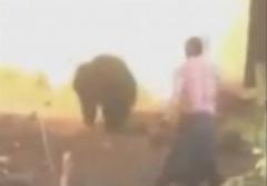 حمله دلخراش ساکنان روستا به یک خرس و کشته شدن خرس