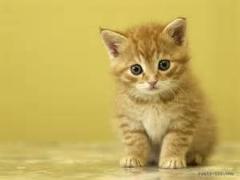 کلیپ جالب و بامزه از گربه های بامزه