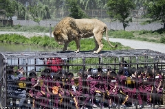 این عجیب ترین باغ وحش جهان است: وقتی حیوانات به انسان های در قفس حمله می کنند!/دردسر فوتبالیستی که هشت میلیون فالوئر اینستاگرامی دارد/کلیسایی به شکل کفش های سیندرلا - برنامه زُل شبکه تی وی پلاس تقدیم می کند