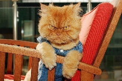 میلیون ها لایک برای گربه عصبانی