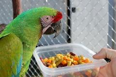 طوطی های گرسنه/ لذت غذا دادن به پرندگان رو حس کردید؟