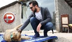 واکنش تند بهرام رادان به ویدیوی منتشر شده از یک سگ آزاری وحشیانه در گرگان: اگر آنجا بودم قطعا دست به یقه می شدیم/بازدید عیدانه سوپراستار سینمای ایران از یک کمپ نگهداری سگ هایی که روزگارشان هر انسانی را متاثر می کند