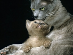 یکی این گربه ها رو بگیره/آخه مگه رو زمین جا نیست که رفتین...