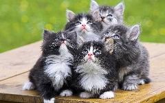 جمعیت گربهها در این جزیره 9 برابر انسانهاست!!
