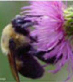 اسلوموشن دیدنی از نشستن زنبور عسل بر روی شهد گل ها
