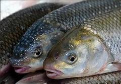 صید ماهی به روش جدید با استفاده از بیل مکانیکی