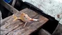 در این کلیپ واقعا عجیب یک ماهی در حال سیگار کشیدن است