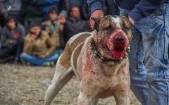 انتشار گسترده فیلم دردناک سگ آزاری؛ عامل شکنجه دستگیر شد