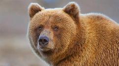 ترساندن یک مرد با لباس خرس و فرار کردن جالبه مرد
