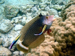 ماهی عجیب و زیبا که با نفس کشیدن بیرون از آب مشکلی ندارد