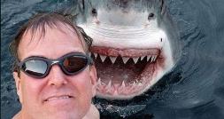 تب سلفی با حیوانات؛ از اقدام احمقانه مرد آمریکایی در سلفی گرفتن با کوسه دو متری تا کشتن دلفین بیچاره
