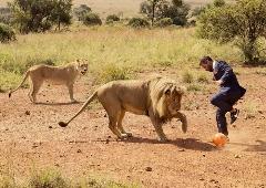 تیم فوتبال شیر های آفریقایی/ببینید با توچ چیکار میکنن