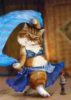 گربه رقاص/گربه ای که همره با آهنگ حرکات موزون انجام می دهد