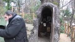 کلیسایی داخل درخت 400 ساله