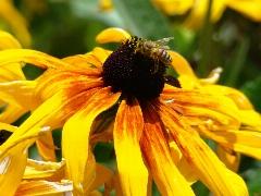 چگونگی آفرینش و تولد یک زنبور را در این ویدئو ببینید