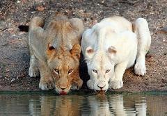 سیزده اسلوموشن دیدنی و زیبا  از حیوانات
