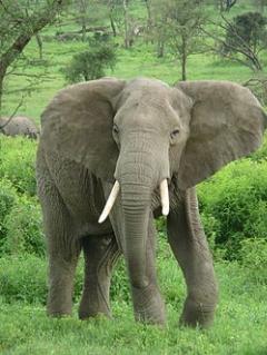 سیلی خوردن از فیل به خاطر سلفی یواشکی