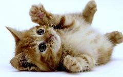 واکنش جالب  گربه در مقابل ربات گربه ای